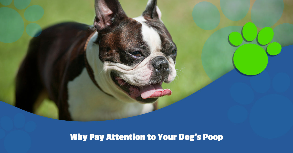 Why Pay Attention to Your Dog's Poop