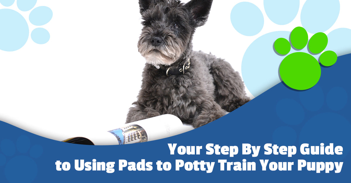 Potty Training Pads: How to Use Pads to Potty Train Your Puppy | Mednet  Direct