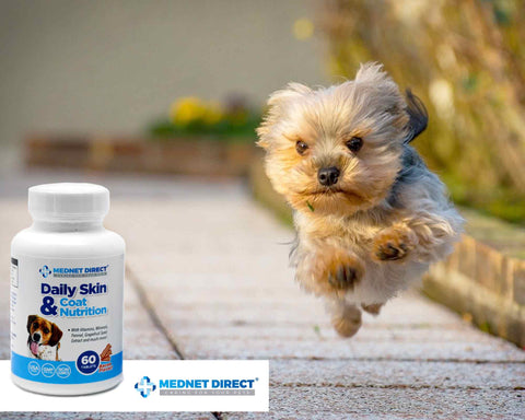 Dog and Animal Supplements