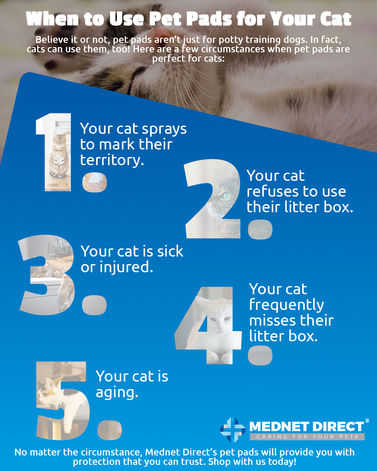 Can You Train Your Cat to Use Pet Pads? | Mednet Direct