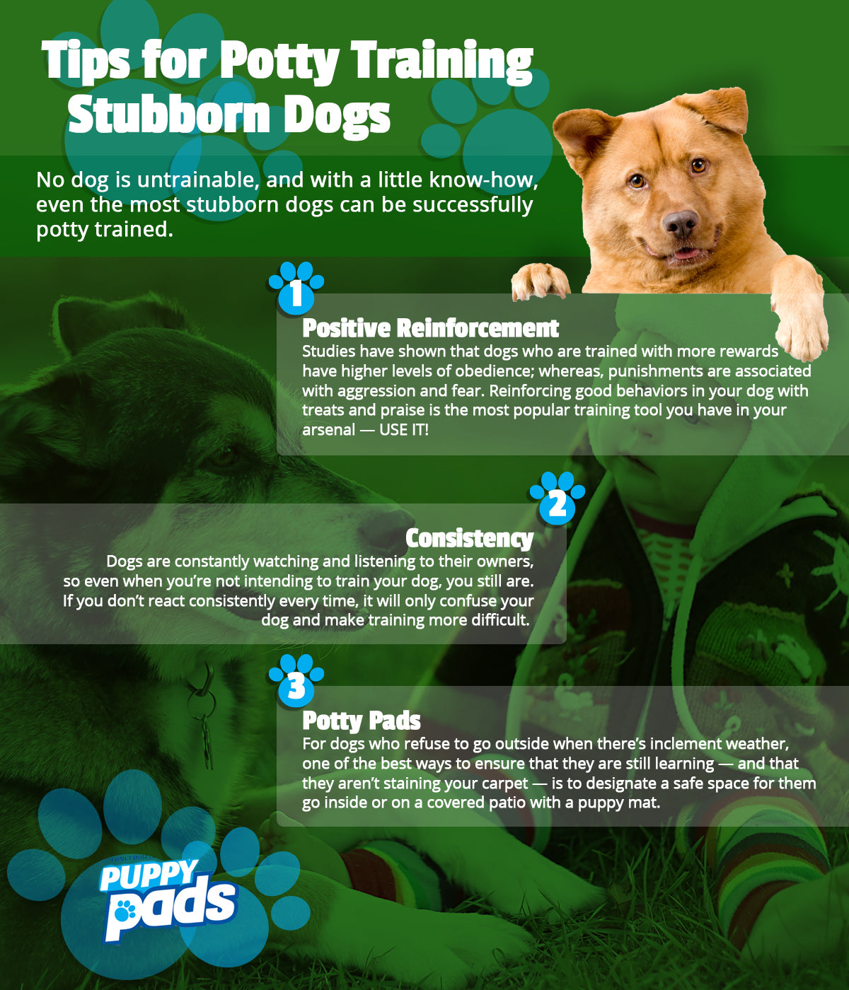 Puppy Mats Tips For Potty Training Stubborn Dogs Mednet Direct