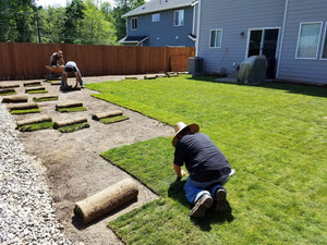 Six Advantages of Installing a Sod Lawn