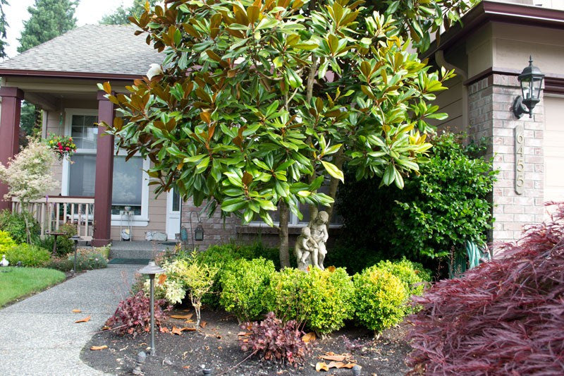Landscape Cleanup - Curb Appeal Snohomish County WA Diamond Package