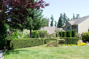 Labor for Pruning Trimming Hedging: Snohomish County, WA