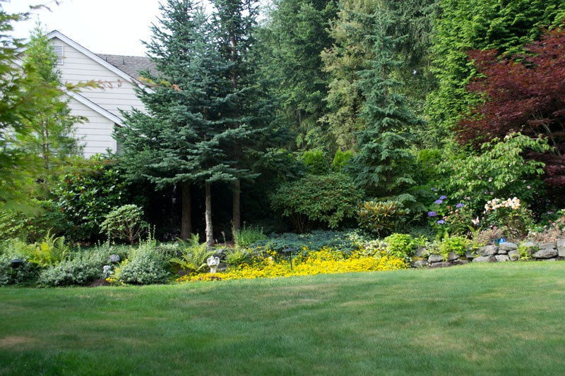 Landscape Cleanup - Curb Appeal Snohomish County WA Bronze Package
