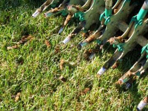Lawn Aeration, Seeding, and Fertilization Snohomish County WA