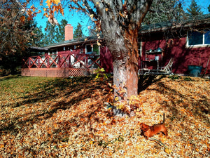 Leaf Removal Snohomish County WA