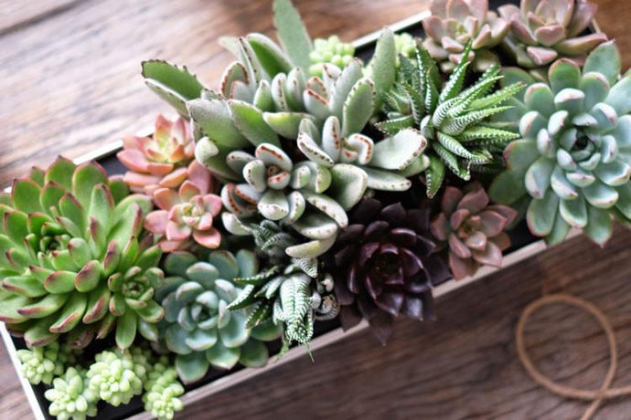 Here Are 6 Plants to Beautify Your Bedroom for a Better Night's Sleep this Earth Day