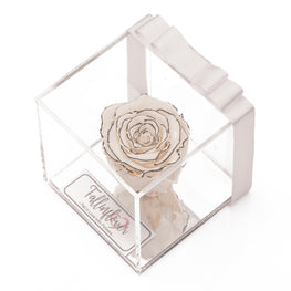 1X Chanel Solmayan Gül - Fall in Flover