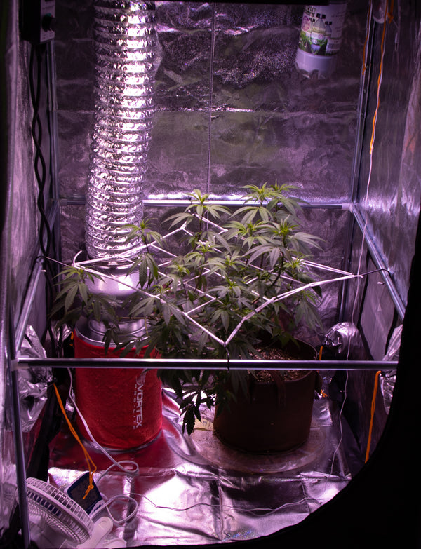 Why is having a Grow Tent Important?