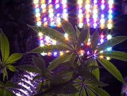 The Right Grow Light for your Cannabis Plant