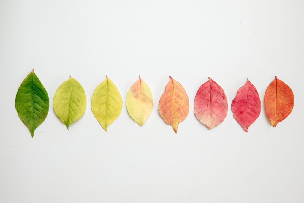 Gradient of autumn leaves in a flatlay.