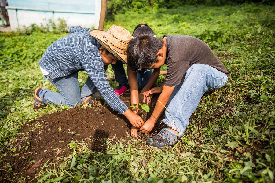 Children planting trees in Latin American