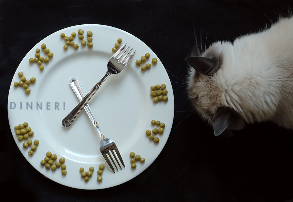 Transitioning Your Pet To A Set Feeding Schedule