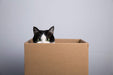 Upcycling Boxes for Your Pets