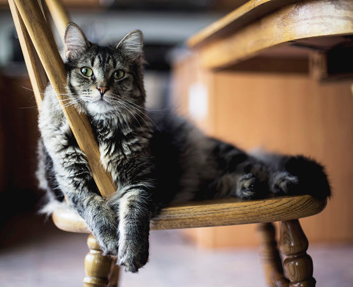 Transitioning Your Cat Indoors