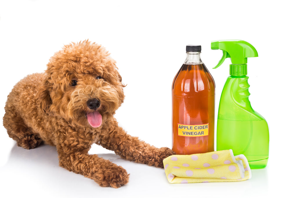 DIY Pet-Safe Cleaners