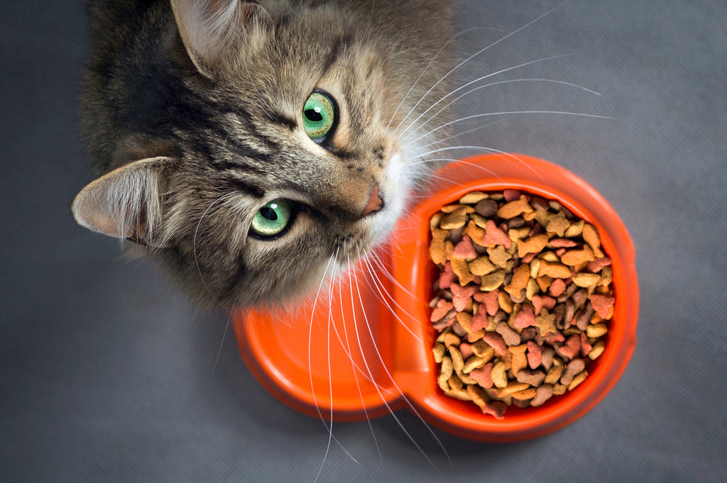 Changing Your Pet's Food