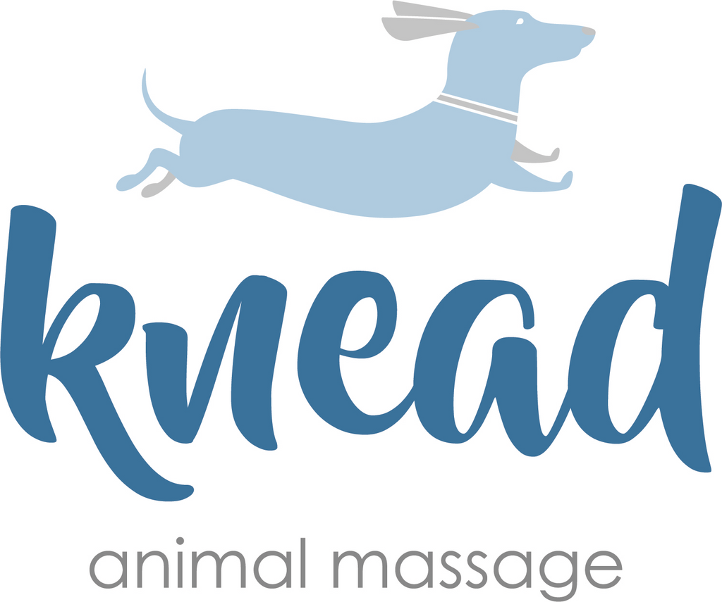 Ask the Expert: Knead Animal Massage