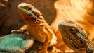 "Keeping Your Reptile ""Cool"" In The Summer Heat"