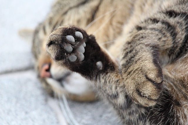 The Truth About Declawing Your Cat