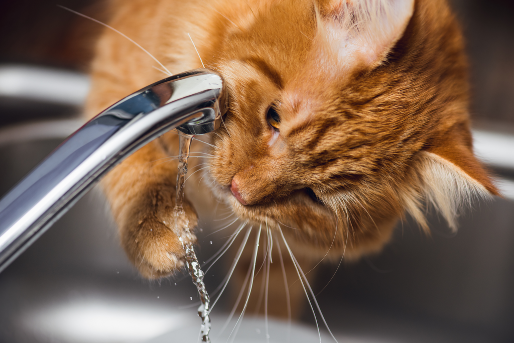 Is Your Cat Drinking Enough Water?