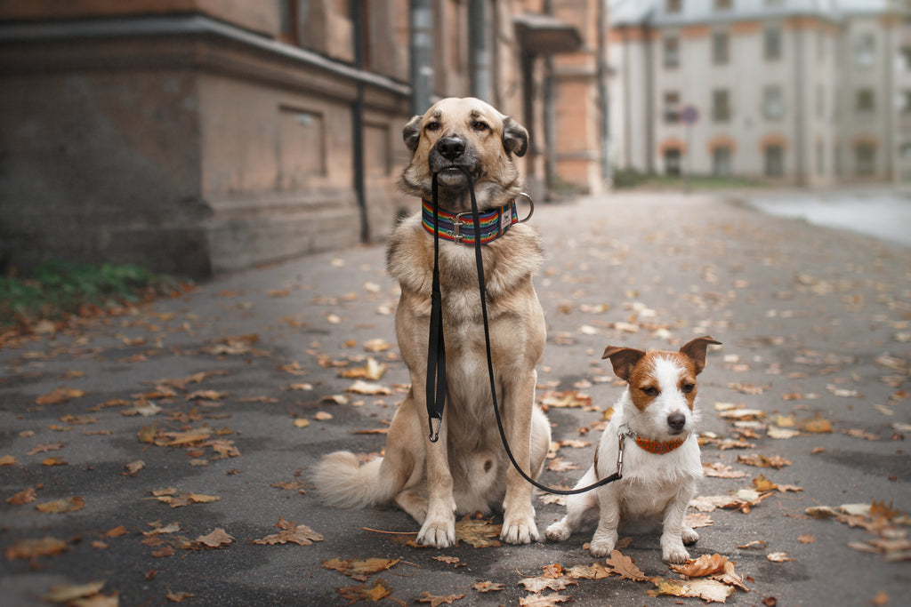 How to Have the Best Dog Walk Ever