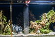 Fish 101: The Importance of Water Changes