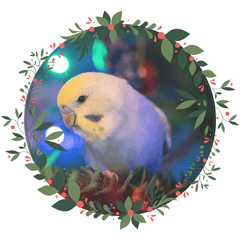 Click here for your Bird Gift Guide