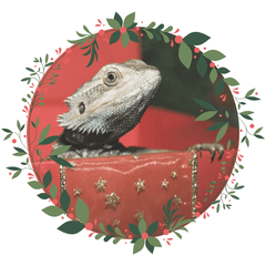 Click here for your Reptile Gift Guide