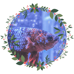 Click here for your Fish Gift Guide