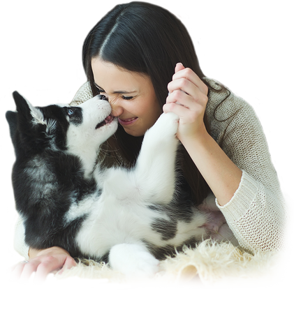 A young husky kissing the nose of a woman who is holding his paw
