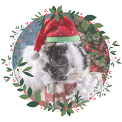 Click here for your Small Animal Gift Guide