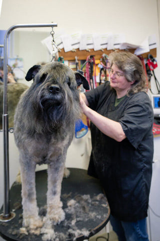 Kathy grooming a large gray and brown dog