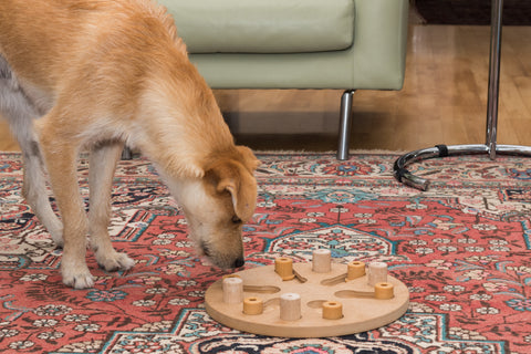 A yellow dog sniffing a puzzle toy on the floor
