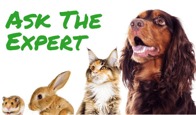 Ask the Expert in green text, animals from left to right: hamster, rabbit, cat, dog.