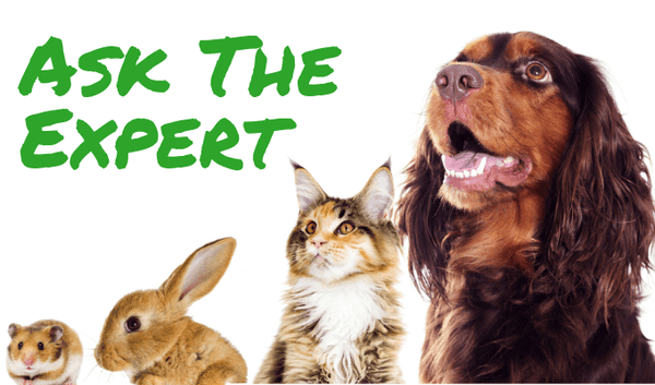 Ask the Expert: Dr. Keith, Animal Healing Arts