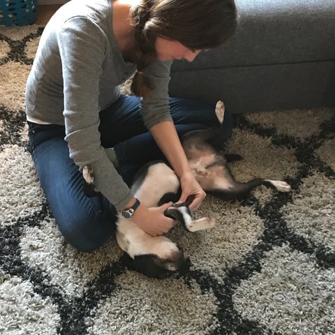 Danielle massaging the front leg of a dog