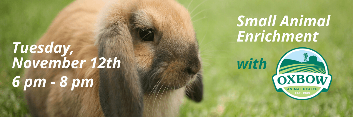 Small Animal Enrichment with Oxbow on Tuesday 11/12