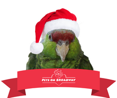 Rosie wearing a santa hat, a banner on the bottom with the Pets on Broadway logo