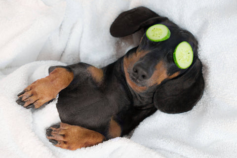 A dog relaxing with cucumber slices over its eyes