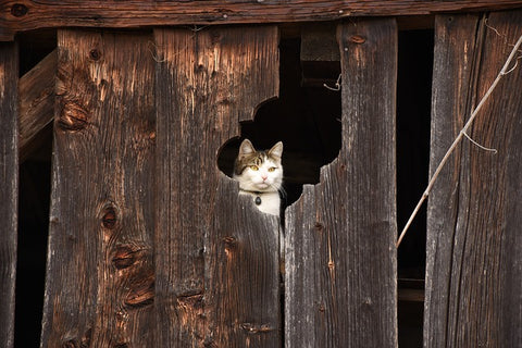 Cat in an abandoned house