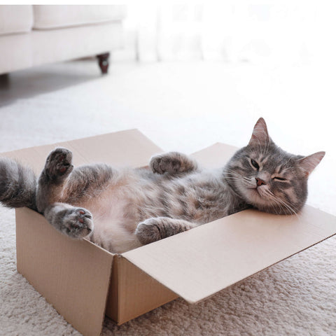 Gray tabby relaxing in a box on the floor