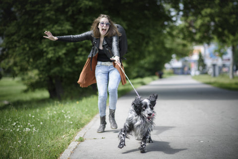 How to Have the Best Dog Walk Ever – Pets on Broadway