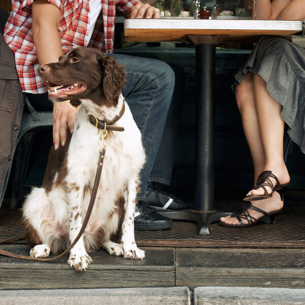 Dog-Friendly Bars and Restaurants – Pets on Broadway