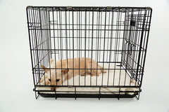 Comfortable Dog In Crate