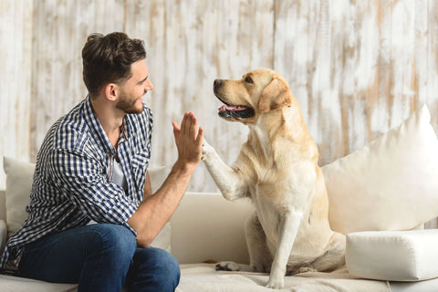 human sitting on the left, yellow lab sitting on the right, giving each other a high five