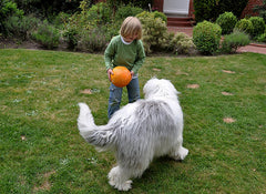 Child Playing with Old English Sheepdog