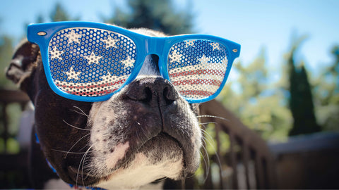 Dog wearing American flag sunglasses