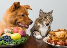Dog and Cat at Thanksgiving table